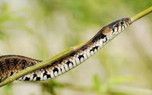 denize düşen neden yılana sarılır